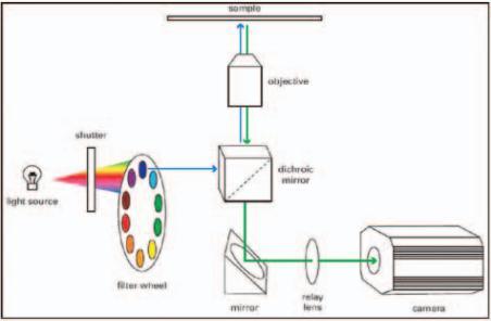 MetaMorph软件是专为生物学高端研究领域的实验研究人员设计、开发的图像处理及分析软件系统。在高端生物学图像分析领域,在全世界拥有最大的客户群。 MetaMorph具有的功能包括:控制相机进行静态或动态图像采集,控制电动显微镜和其他显微镜周边电动器件进行多维图像采集,FRET成像分析,蒙太奇制作,动画制作,细胞计数,综合形态学分析,三维图像重建,多色荧光叠加,2D/3D去模糊处理,粒子轨迹跟踪,图像拼接,Best foucs等。