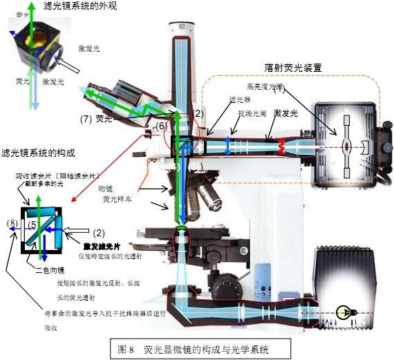 落射荧光显微镜原理和使用方法